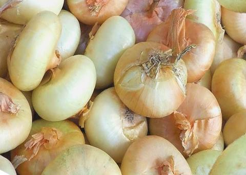 Valbona Blog - Borettane onions and the fascinating way they are harvested